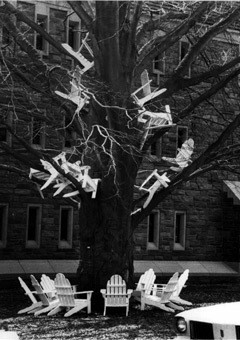Adirondack chairs in a tree outside Parrish Hall